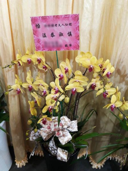 台湾 葬式 仏花 コチョウラン