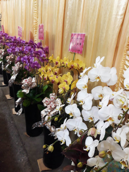 台湾 仏花 葬式